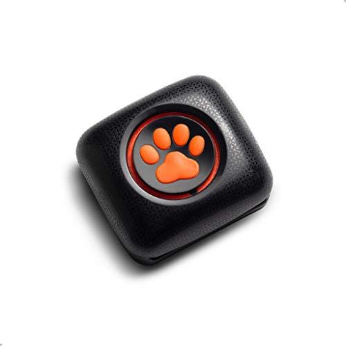 Aktivitäts-Tracker für Hunde