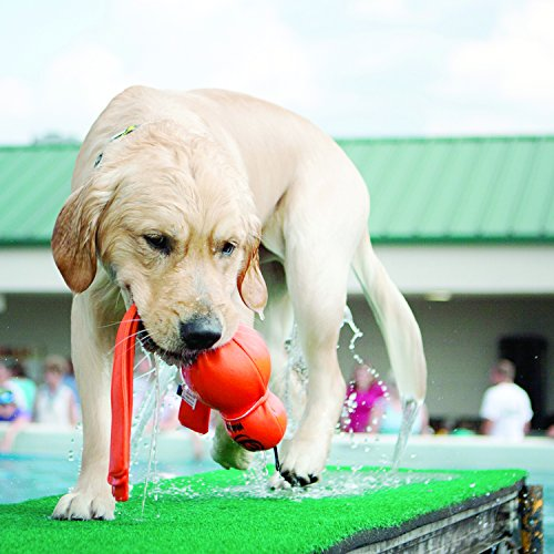 KONG – Wubba Wet – Wasserspielzeug zum Apportieren – Große Hunde (verschiedene Farben)
