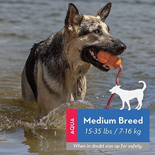 KONG – Aqua – Schwimmendes Wasserspielzeug zum Apportieren – Für Mittelgroße Hunde