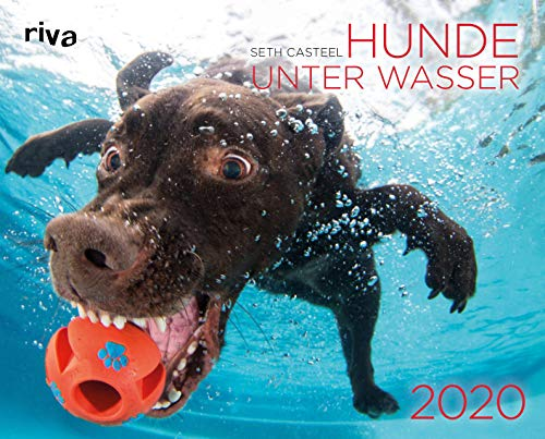 Wandkalender für Hundefreunde