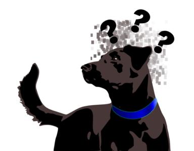 dieta de diabetes hund erblindet durch