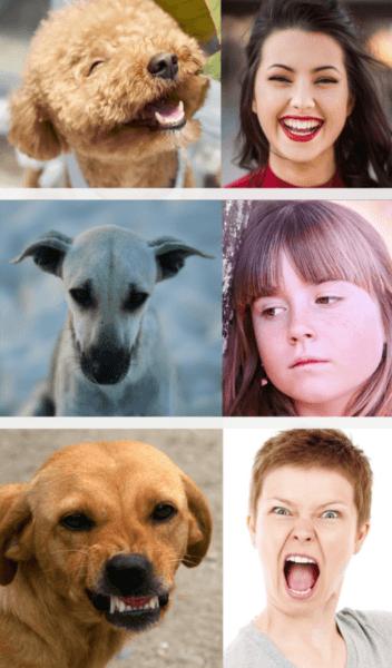 Gegenüberstellung Mimik Hund und Mensch