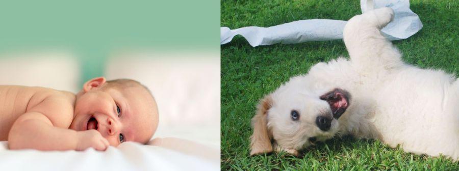 Gegenüberstellung Freude Baby Welpe