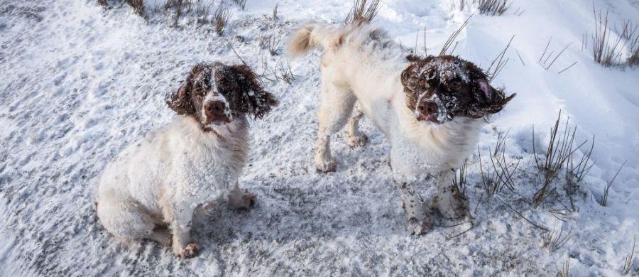 Auch Hunde Haben Schuppen Trockene Haut Los Werden Hundefunde