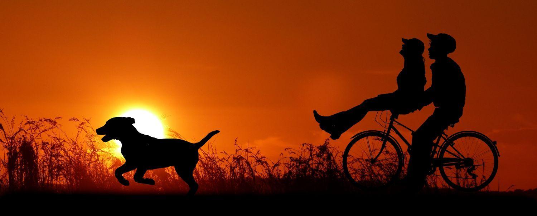 Silhouette von Pärchen auf Fahrrad und rennender Hund vor Sonennuntergang