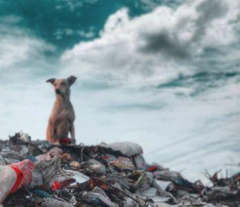 Hund auf Müllhalde