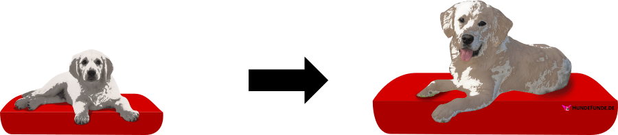 Illustration kleines Hundebett für Welpen