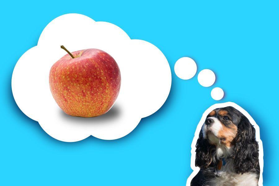 dürfen kaninchen äpfel essen