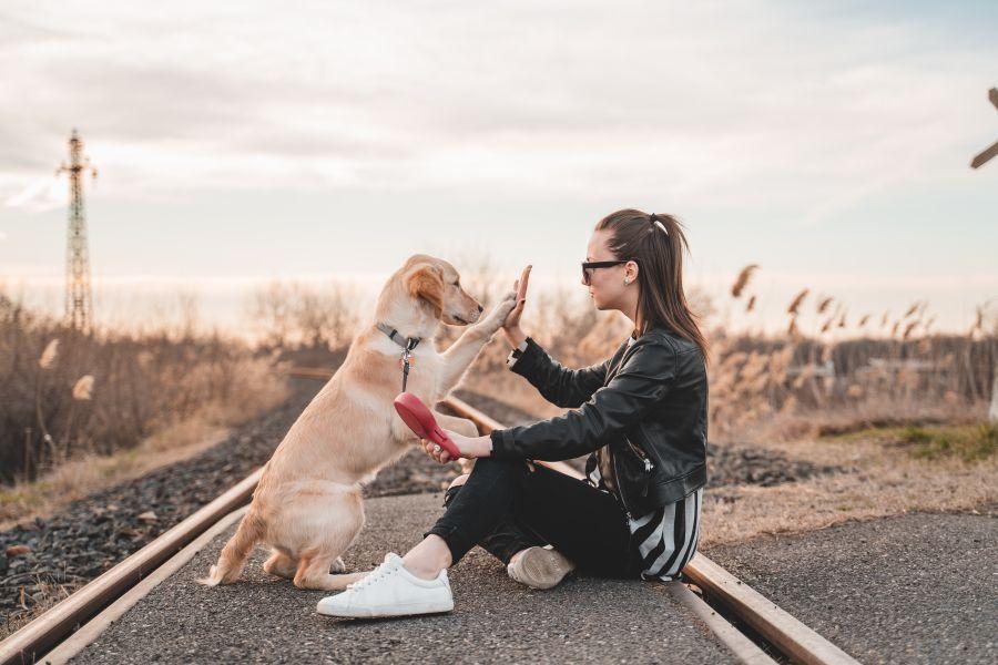 High Five Retriever an Flexileine und Frau