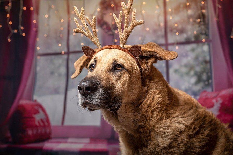 Weihnachtsgeschenke für Hunde: die schönsten Ideen