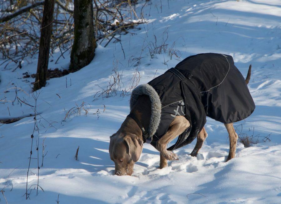 Hundemantel zu gross