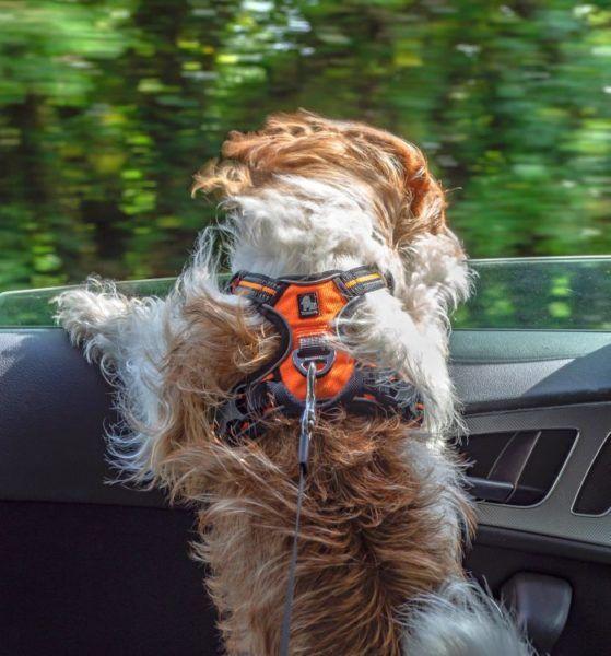 Hundegeschirr mit Brustring Anleinöse aus Alu