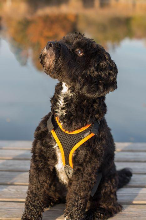 Große Halsöffnung an Hundegeschirr mit Polster