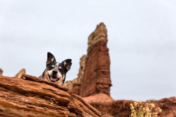 Wandertour mit Hund
