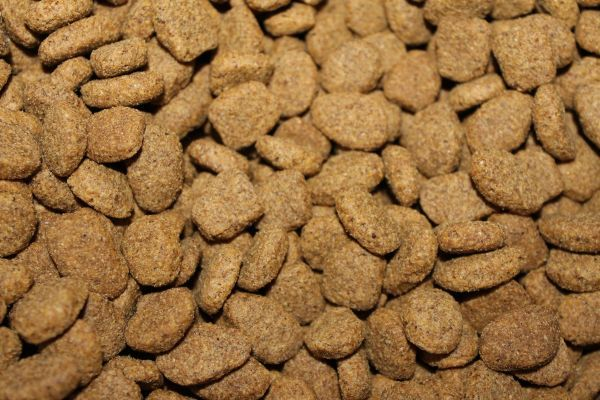 Hundefutter enthalten verschiedene Quellen für Fettsäuren