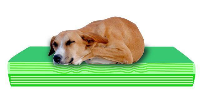 Schaumstoff in einem viskoelastischen Hundebett