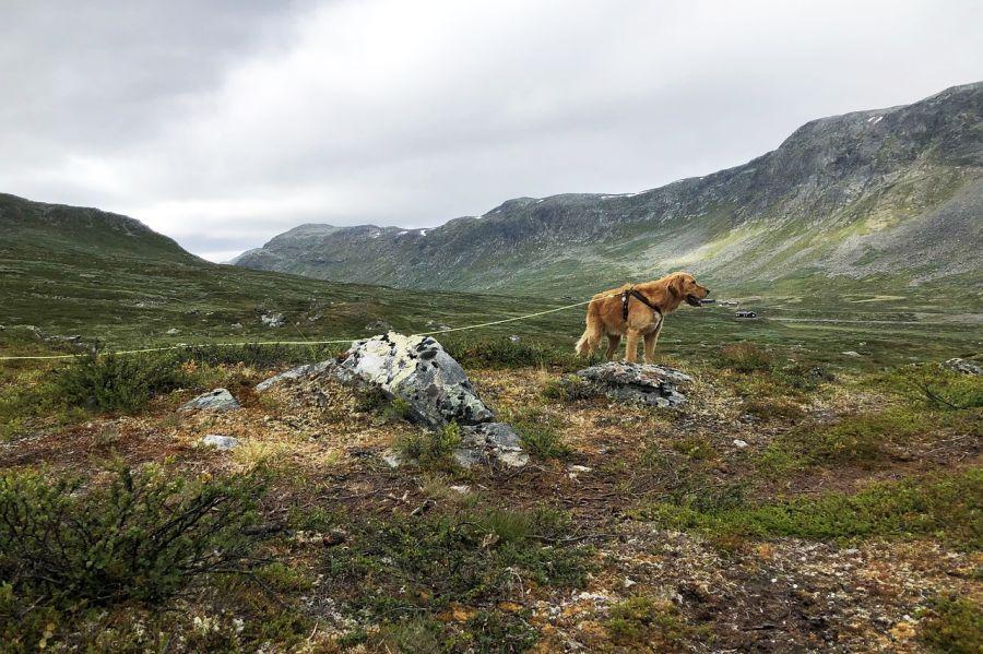 Die 31 besten Bilder von Leine   Halsband   Hundegeschirr