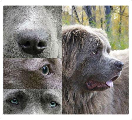 Blaues hautpigment beim Hund
