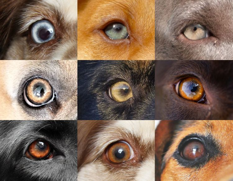 Augen blaue grüne oder Wie du