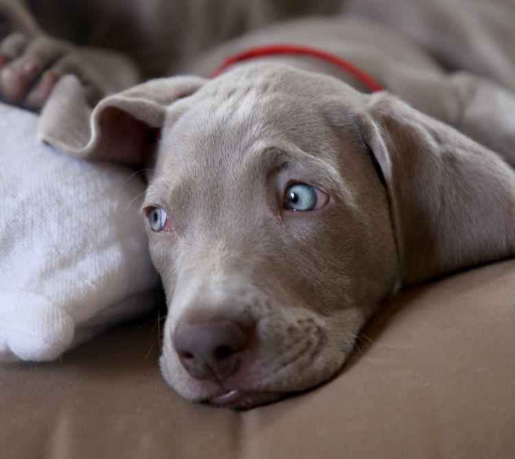 Hunde Mit Blauen Augen Ursachen Hunderassen Infos Hundefunde