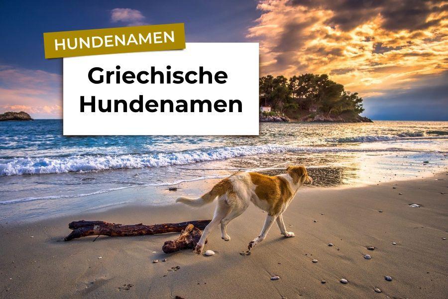 Hunde am Strand mit Insel im Hintergrund