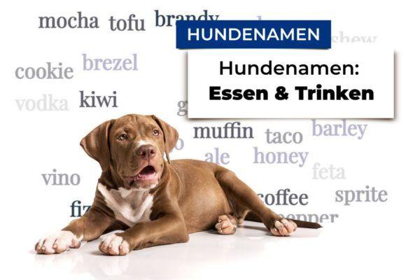 Hund liegt Grafik mit Hundenamen aus den Bereichen Essen und Trinken