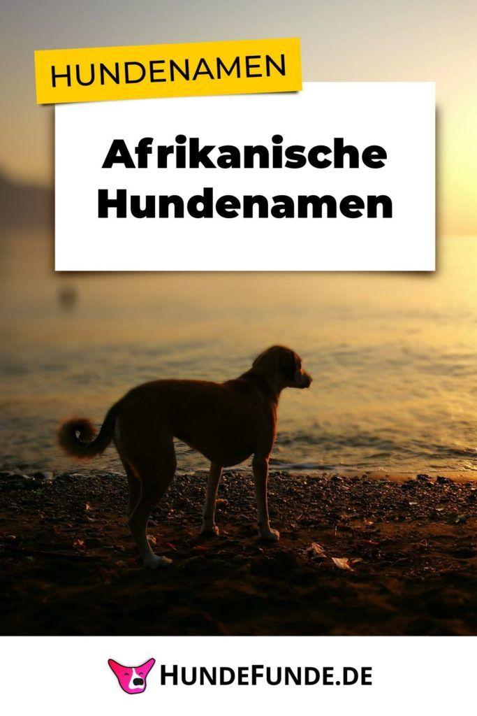 Pin zum Beitrag über afrikanische Hundenamen
