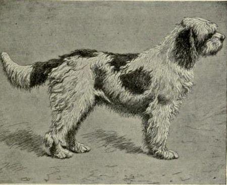 Barbet Illustration 1907