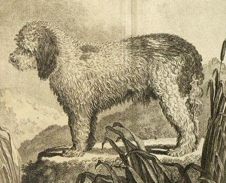 Barbet Illustration 1755